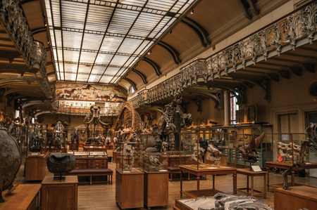 Paris, northern France - July 10, 2017. Prehistoric skeletons and fossils at the Gallery of Paleontology and Comparative Anatomy in Paris. Known as one of the world's most impressive cultural centers. Editorial