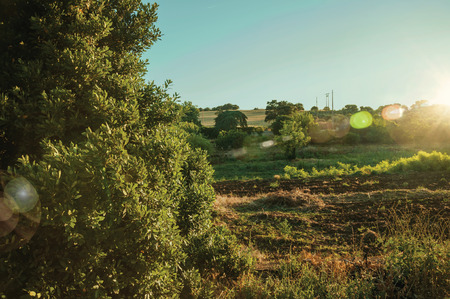 Rural landscape with green bushes and trees next to a plowed ground at sunset, in a farm near Elvas. A gracious star-shaped fortress city on the easternmost frontier of Portugal. Retouched photo.