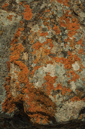 Close-up of rough stone covered by moss and lichens in a sunny day, forming a singular pattern at Evoramonte. A tiny fortified civil parish over hill where stands out its historic castle in Portugal. Banco de Imagens