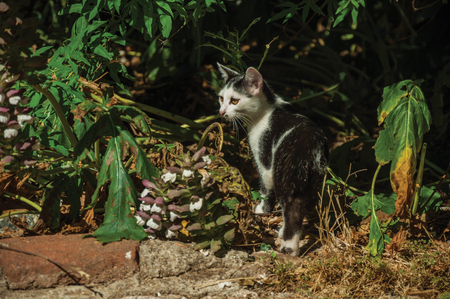 Close-up of a cute kitten looking next vegetation like in a hunt, in the courtyard of small farm near Elvas. A gracious star-shaped fortress city on the easternmost frontier of Portugal. Stockfoto