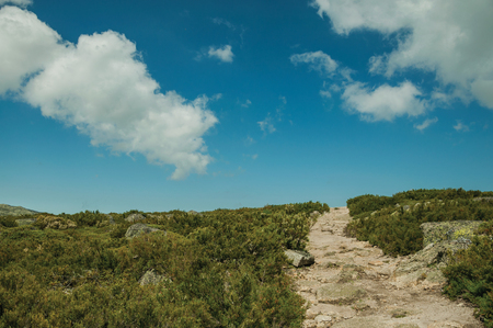 Rough hiking trail going through rocky terrain covered by bushes on highlands, in a sunny day at the Serra da Estrela. The highest mountain range in continental Portugal, with astonishing scenery. Фото со стока