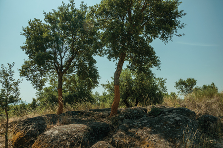 Countryside rocky terrain covered by dry brushwood and a few peeled cork trees, in a sunny day near Monsanto, considered one of the cutest and most peculiar historic village of Portugal. Imagens