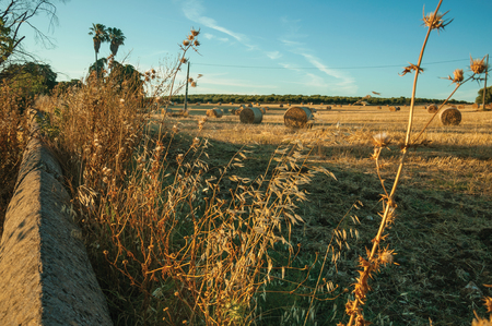 Rural landscape with dried bushes and stone wall next to bales of hay on field at sunset, in a farm near Elvas. A gracious star-shaped fortress city on the easternmost frontier of Portugal.