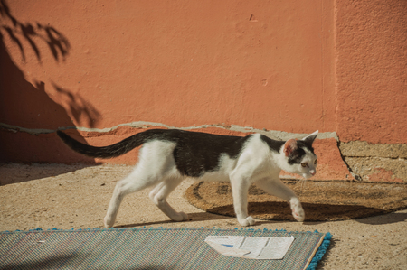 Close-up of a cute kitten walking like in a hunt next a colorful wall, in the courtyard of small farm near Elvas.