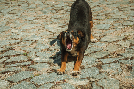 Sympathetic mutt dog yawning standing on cobblestone alley, in a sunny day at Linhares da Beira. A medieval hamlet with unique architectural diversity fruit of several times, in eastern Portugal. Banco de Imagens