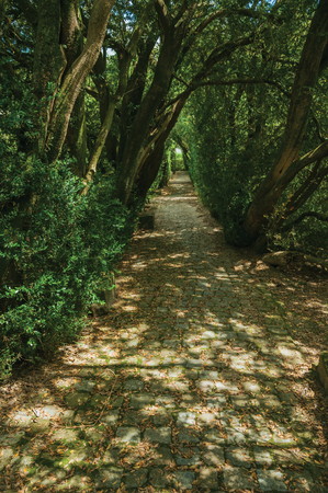 Garden with cobblestone pathway and leafy trees making a shaded tunnel, in a sunny day at Gouveia. A nice country town with gardens and captivating historical heritage in Portugal.