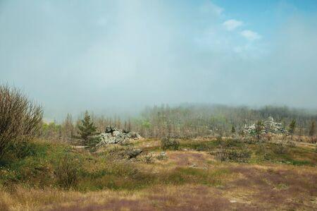 Felsige Landschaft mit Bäumen in einem von Nebel bedeckten verbrannten Wald, über grünen Feldern mit Büschen an der Serra da Estrela. Das höchste Gebirge des kontinentalen Portugals mit einer erstaunlichen Landschaft. Standard-Bild