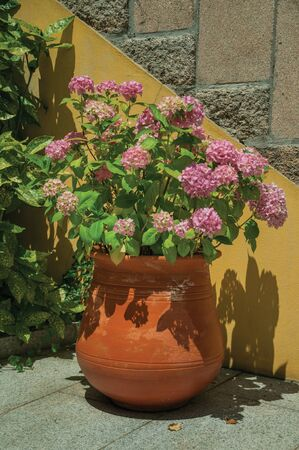 Big clay pot with colorful flowers next to staircase wall, in a sunny day at Seia. On foothill mountains, this friendly town in eastern Portugal is also known for its delicious artisanal cheese.