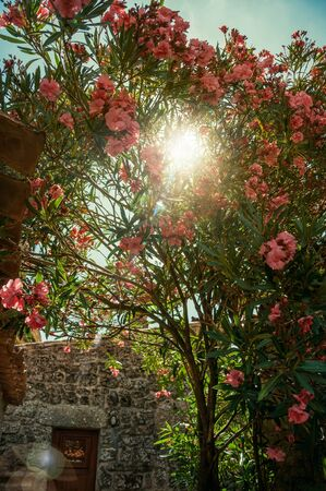 Close-up of a sunbeam passing through leafy shrub covered by colorful flowers at Sortelha. One of the most astonishing and well preserved medieval villages in all Portugal. Retouched photo.