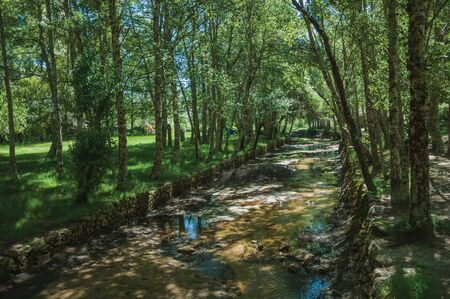 Small mountain stream running through the leafy green grove in a sunny day, at the highlands of Serra da Estrela. The highest mountain range in continental Portugal, with astonishing scenery.