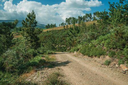 Dirt road passing through hilly terrain covered by bushes and trees, in a sunny day at the highlands of Serra da Estrela. The highest mountain range in continental Portugal, with astonishing scenery.