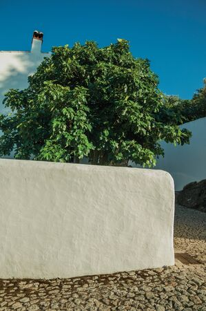 Backyard wall covered by white plaster with leafy tree on sunny day in a cobblestone alley at Marvao. An amazing medieval fortified village perched on a granite crag in eastern Portugal.