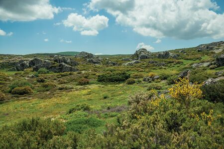 Bushes among quaint rocky terrain covered by moss and lichen on highlands, in a sunny day at the Serra da Estrela. The highest mountain range in continental Portugal, with astonishing scenery.