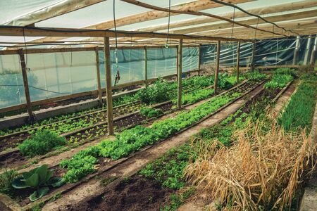 Vegetable garden inside a greenhouse with lettuces and other greenery in a farm near Bento Goncalves. A friendly country town in southern Brazil famous for its wine production. 스톡 콘텐츠