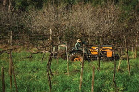 Rural landscape with a farmer working on a tractor amid rows of leafless grapevines, in a vineyard near Bento Goncalves. A friendly country town in southern Brazil famous for its wine production. Фото со стока