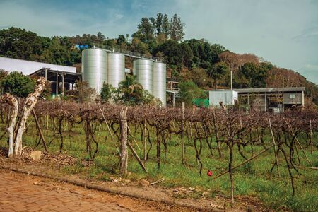 Landscape with trunks and vine branches in front of stainless steel storage tanks from a winery plant near Bento Goncalves. A friendly country town in southern Brazil famous for its wine production.