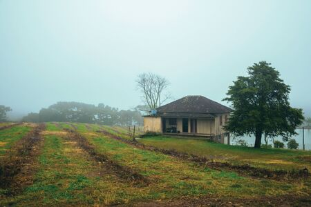 Countryside landscape with cultivated fields, farmhouse and lake in a foggy day near Bento Goncalves. A friendly country town in southern Brazil famous for its wine production.