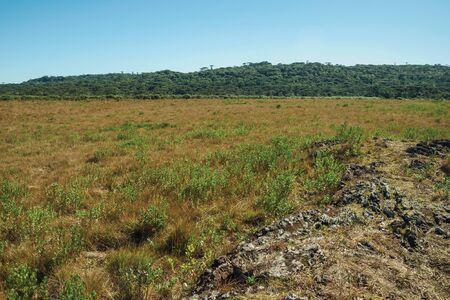 Landscape of rural lowlands called Pampas with trees and dry bushes all over the place near Cambara do Sul. A small country town in southern Brazil with amazing natural tourist attractions. Imagens