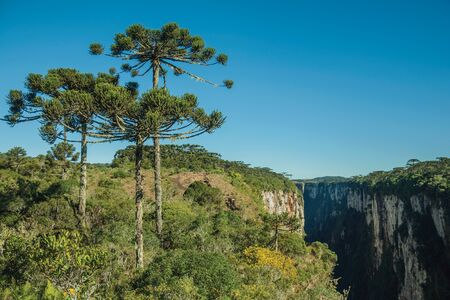 Itaimbezinho Canyon with steep rocky cliffs in a flat plateau covered by forest and pine trees near Cambara do Sul. A small country town in southern Brazil with amazing natural tourist attractions. Фото со стока