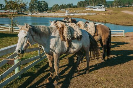Horses standing tied on wooden fence with typical saddle made of sheep wool, on a ranch near Cambara do Sul. A small rural town in southern Brazil with amazing natural tourist attractions. 免版税图像