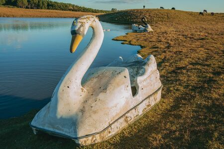 Pedal boat made of fiberglass in the shape of swan on the edge of small lake at sunset, in a farm near Cambara do Sul. A small rural town in southern Brazil with amazing natural tourist attractions. Banque d'images
