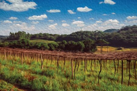 Rural landscape with rows of leafless grapevines in a vineyard and wooded hills near Bento Goncalves. A friendly country town in southern Brazil famous for its wine production. Oil Paint filter. Banque d'images