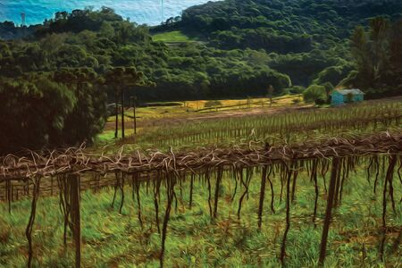 Rural landscape with rows of leafless grapevines in a vineyard with country house near Bento Goncalves. A friendly country town in southern Brazil famous for its wine production. Oil Paint filter. Banque d'images