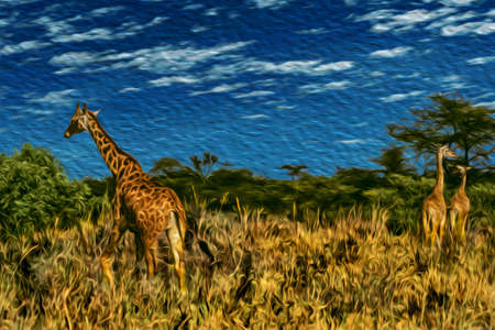 Giraffes in the thicket at the Ngorongoro conservation area. A park for the wildlife protection located on a large volcanic crater in the African savanna of Tanzania. Oil paint filter. Stok Fotoğraf