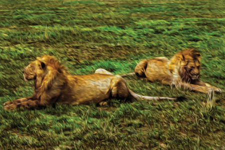 Lions lying lazily over green grass in the flat landscape of Serengeti National Park. A conservation area in the African savanna where several species of large mammals live. Oil paint filter.
