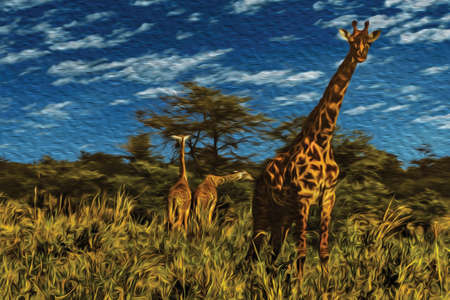 Giraffes on the thicket at the Serengeti National Park. A conservation area in the African savanna where several species of large mammals live. Oil paint filter. Stok Fotoğraf