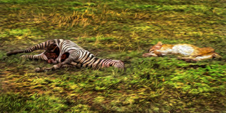 Lions lying over grass beside zebra carcass in the flat landscape of Serengeti National Park. A conservation area in the African savanna where several species of large mammals live. Oil paint filter. Stok Fotoğraf