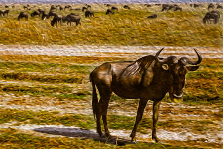 Wildebeest grazing on dry pasture in the Ngorongoro conservation area. A park for the wildlife protection located on a large volcanic crater in the African savanna of Tanzania. Oil paint filter.