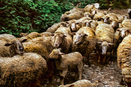 Flock of sheep passing through a dirt trail in forest at the Way of St. James. A famous pilgrimage route leading to Santiago de Compostela in northern Spain. Oil paint filter. 写真素材