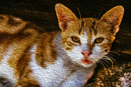 Close-up of an inquisitive cat on shadow in Toledo. A medieval city famous for the production of exceptional bladed weapons, in central Spain. Oil paint filter.
