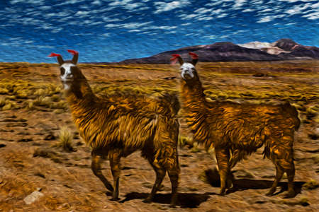 Several furry llamas grazing on dry landscape in the Andean highland of Bolivia. The highest region with the largest mountain range in the Americas. Oil paint filter.