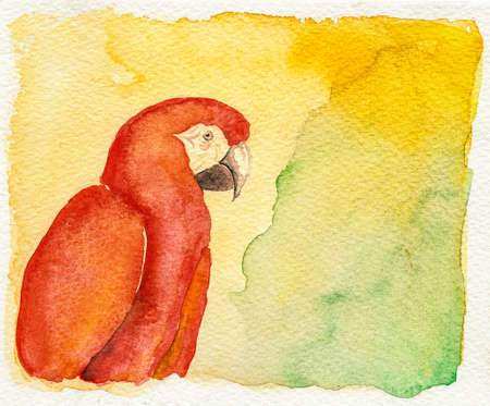 Portrayal of a colorful parrot on yellow and green background. Watercolor painting.