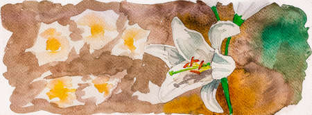 Portrayal of a white lily flower in brown background. Watercolor painting.