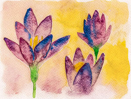 Portrayal of a colorful tulip flowers in yellow background. Watercolor painting.