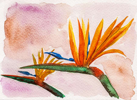 Portrayal of colorful strelitzia flowers in beige background. Watercolor painting.