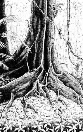 Illustration of huge roots from a big tree in the middle of rainforest, in comics style. Ink drawing.