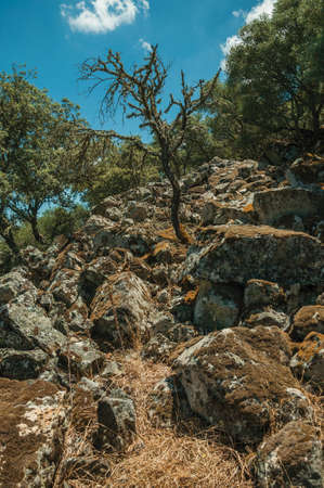 Trees and dry bushes on a rocky hill slope covered by moss, in a sunny day at the Monfrague National Park, in Spain.
