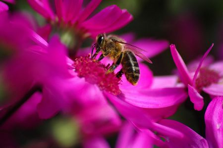 Daisies with bee Stock Photo - 440252