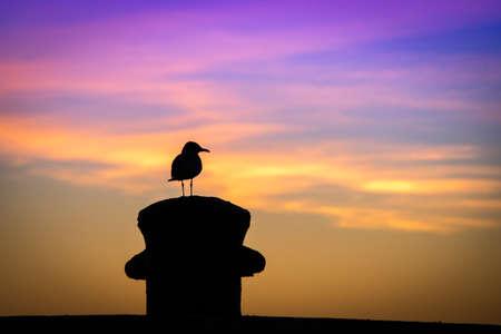 monroe: Silhouette of a bird, Key West, Monroe County, Florida, USA Stock Photo