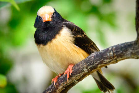 Low angle view of a black and beige bird perching on a tree branch, Key West, Monroe County, Florida, USA