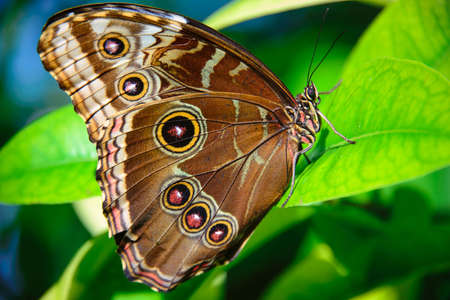 photography themes: Close-up of a Brown butterfly on a leaf, Key West, Monroe County, Florida, USA Stock Photo