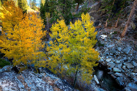 high sierra: High angle view of trees, Lake Tahoe, Sierra Nevada, California, USA Stock Photo