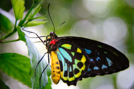 photography themes: Yellow and Black Butterfly on leaves, Key West, Monroe County, Florida, USA Stock Photo