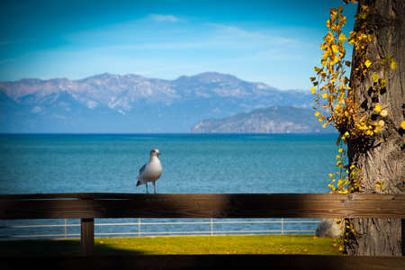 south lake tahoe: Seagull perching on a wooden fence, Lake Tahoe, California, USA Stock Photo