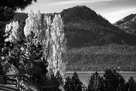 Trees at the lakeside, Lake Tahoe, California, USA photo