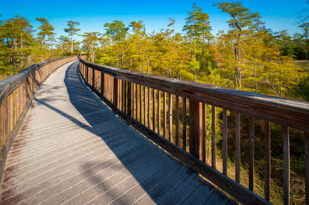 trees photography: Wooden bridge in a forest, Kirby Storter Roadside Park, Ochopee, Collier County, Florida, USA Stock Photo